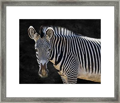 Camouflage Framed Print featuring the photograph Z Is For Zebra by Juli Scalzi
