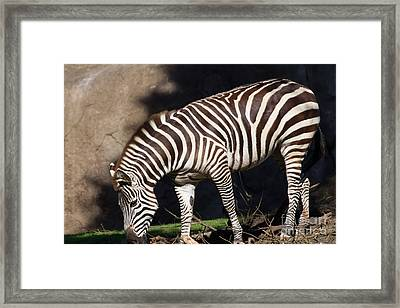 Zebra 7d8950 Framed Print by Wingsdomain Art and Photography