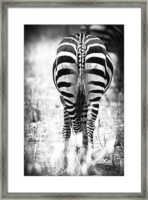 Zebra Butt Framed Print by Adam Romanowicz