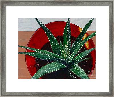 Zebra Cactus In Red Glass Framed Print by Barbara Griffin