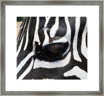Zebra Eye Framed Print by Linda Sannuti