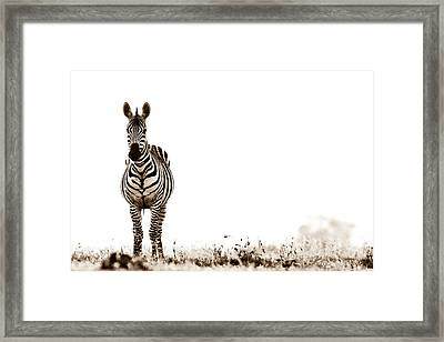 Zebra Facing Forward Washed Out Sky Bw Framed Print by Mike Gaudaur