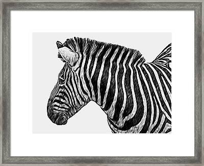 Zebra - Happened At The Zoo Framed Print by Jack Zulli