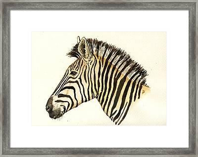 Zebra Head Study Framed Print by Juan  Bosco