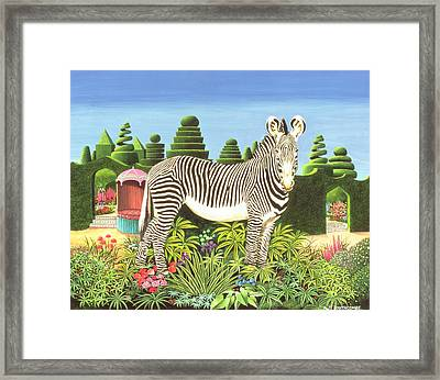 Zebra In A Garden Framed Print by Anthony Southcombe