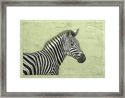 Zebra Framed Print by James W Johnson