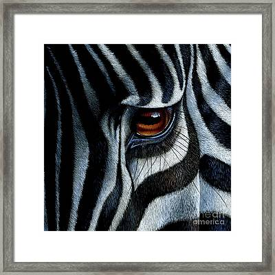 Zebra Framed Print by Jurek Zamoyski
