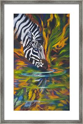 Zebra Framed Print by Kd Neeley
