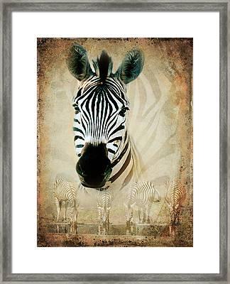 Zebra Profile Framed Print by Ronel Broderick