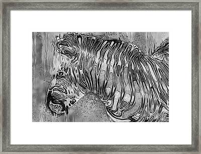 Zebra - Rainy Day Series Framed Print by Jack Zulli