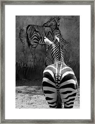 Zebra Framed Print by Veronika Limonov