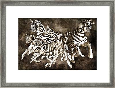 Zebras Framed Print by Betsy Knapp