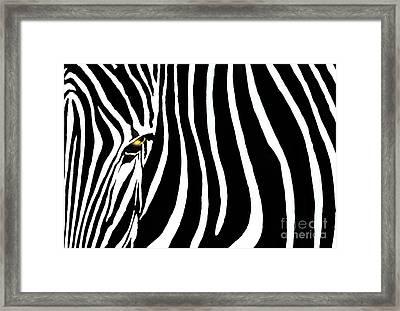 Zebressence Framed Print by Dan Holm
