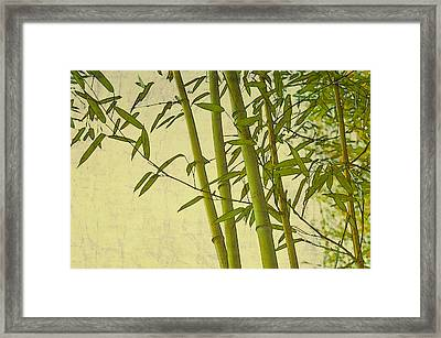 Zen Bamboo Abstract I Framed Print by Marianne Campolongo