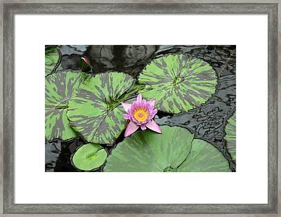 Zen Lotus  Framed Print by Michel Kotski