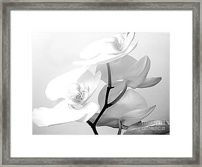 Zen Framed Print by Maureen J Haldeman