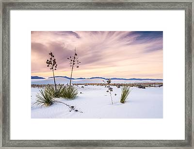 Zen Of Yuccas In White Sands Framed Print by Ellie Teramoto
