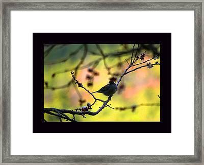 Zen Spring Framed Print by Susanne Still