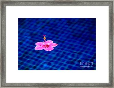 Zero Gravity Framed Print by Aiolos Greek Collections
