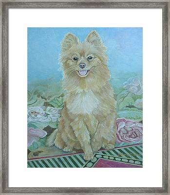 Zeus Framed Print by Kimberly McSparran