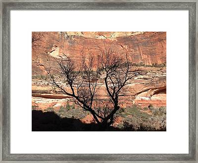 Zion Canyon Tree #1 Framed Print by Feva  Fotos