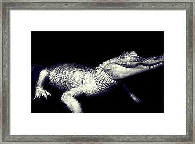 Zombie Gator Framed Print by Jeremy Martinson