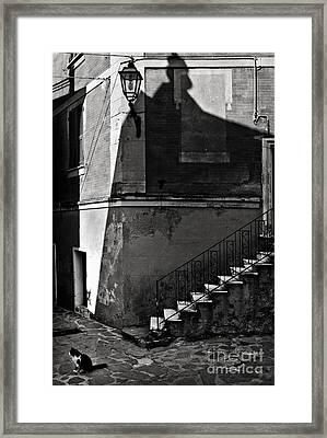 Zorro's Cat Framed Print by Michel Verhoef