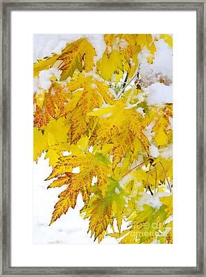 Autumn Snow Portrait Framed Print by James BO  Insogna