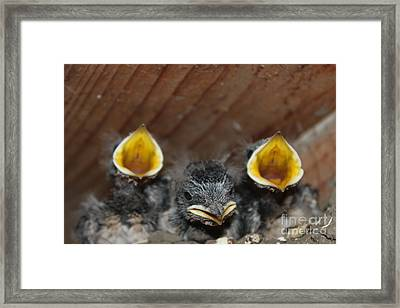 Birds Not A Reptiles  Www.pictat.ro Framed Print by Preda Bianca Angelica
