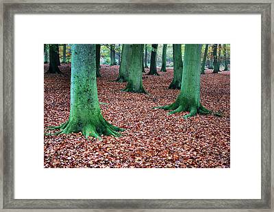 Day Of The Tree Feet.  Framed Print by Terence Davis