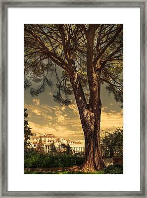 Pine Tree In The Secret Garden Framed Print by Jenny Rainbow