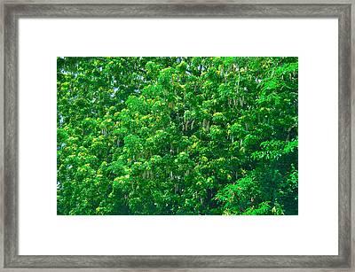 Tibit Tree Framed Print by David Alexander