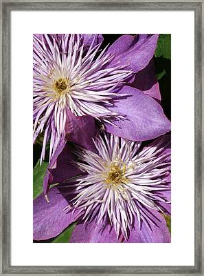 06182012 018 Framed Print by Mark J Seefeldt