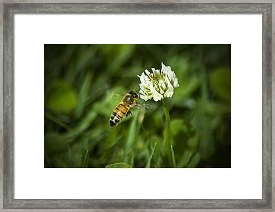 081212-82 Framed Print by Mike Davis