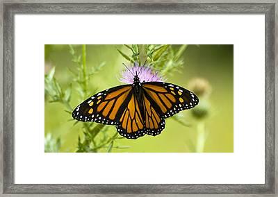 091712-10 Framed Print by Mike Davis