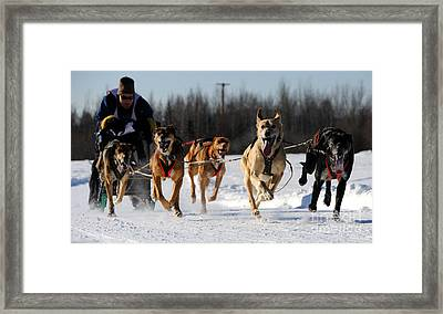 2011 Limited North American Sled Dog Race Framed Print by Gary Whitton