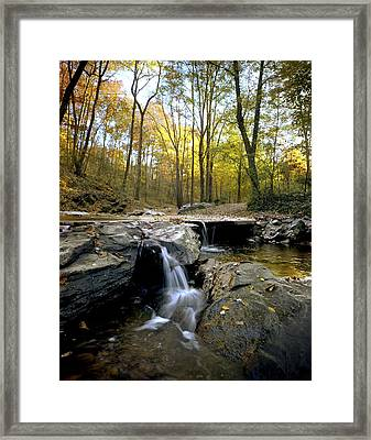 A Woodland View At Long Branch Nature Framed Print by Rex A. Stucky