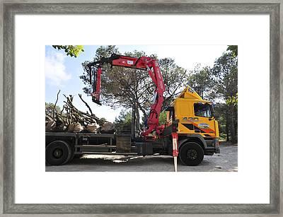 Afforestation Framed Print by Photostock-israel