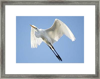 Angel Wings Framed Print by Paulette Thomas