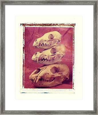 Animal Skulls Framed Print by Garry Gay