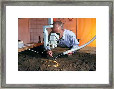Archaeologist Cleaning A Golden Celtic Necklace Framed Print by Volker Steger