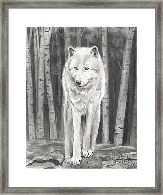 Arctic Wolf Framed Print by Christian Conner