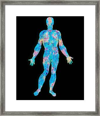 Artwork Of The Human Venous System (from Vesalius) Framed Print by Mehau Kulyk