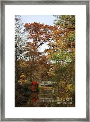 Autumn Forest Framed Print by Angela Doelling AD DESIGN Photo and PhotoArt