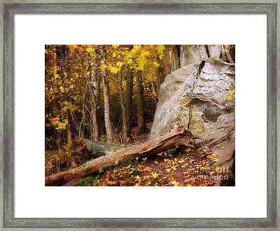 Autumn Forest Day Framed Print by Lutz Baar