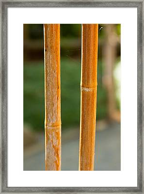 Bamboo Fence With A Strand Of Spiderweb. Framed Print by Andrei Orlov