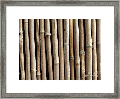 Bamboo Fence Framed Print by Yali Shi