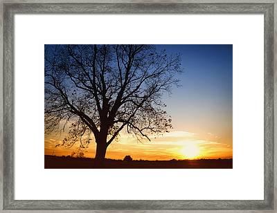 Bare Tree At Sunset Framed Print by Skip Nall