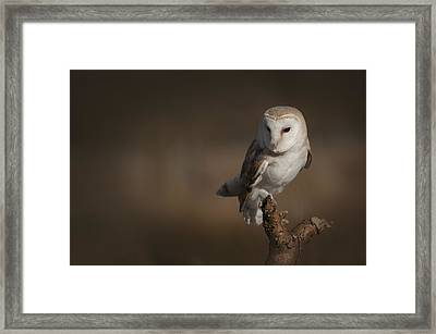 Barn Owl Framed Print by Andy Astbury