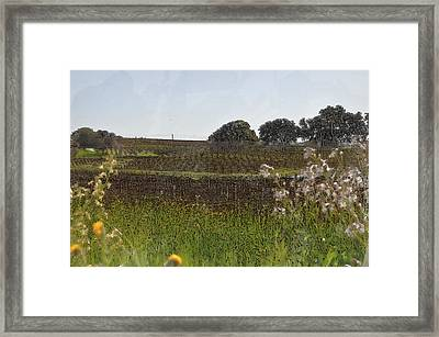 Beautiful California Vineyard Framed With Flowers Framed Print by Brandon Bourdages